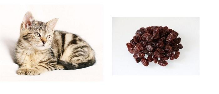 Should Cats Eat Nuts