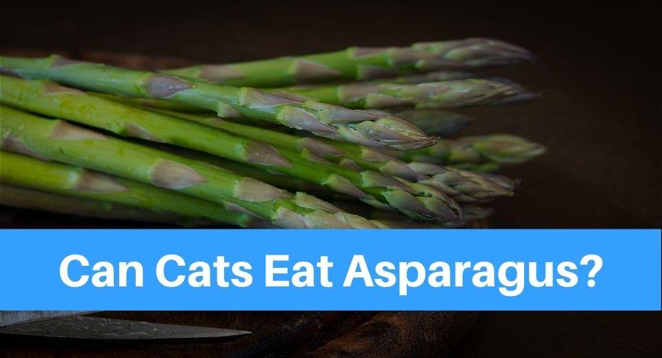 aspagarus