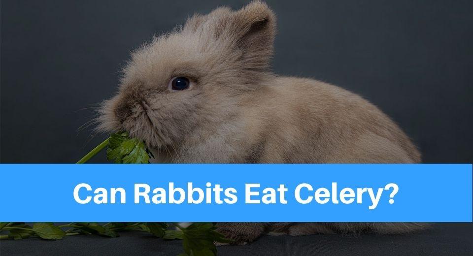 raabit-eat-celery