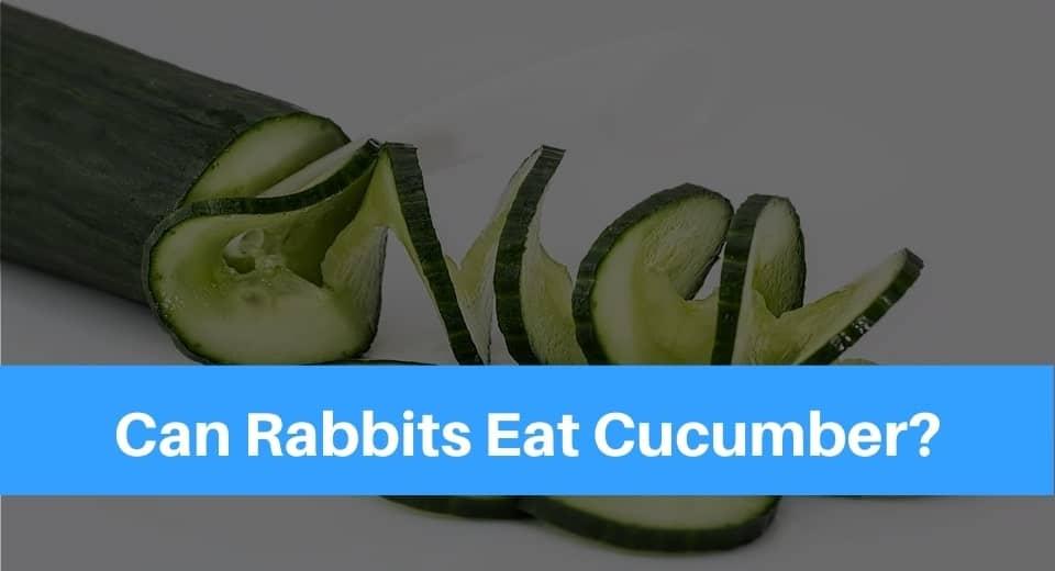 rabbit-eat-cucumber