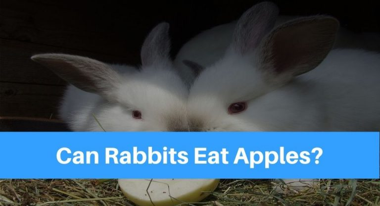 rabbits-eat-apple