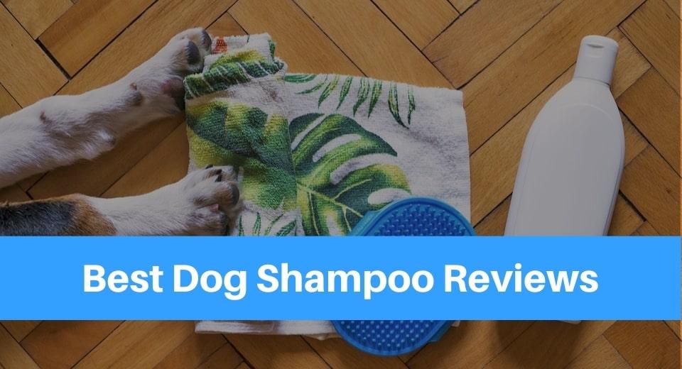 Best-Dog-Shampoo