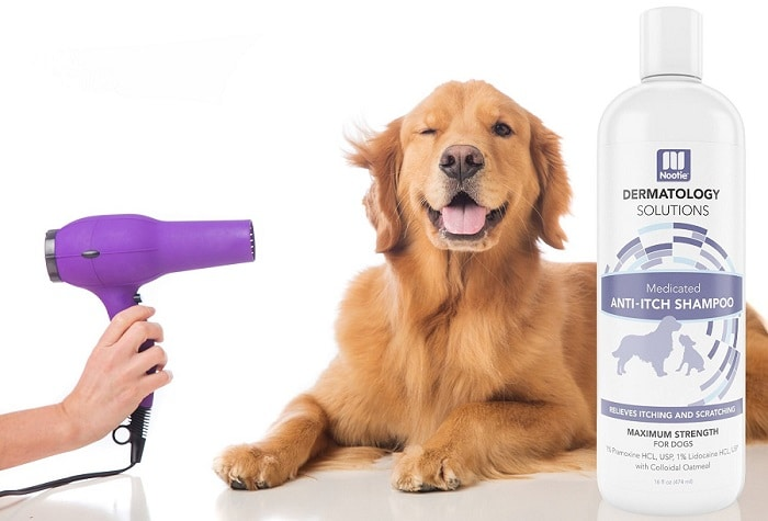 Medicated Oatmeal Dog Shampoo
