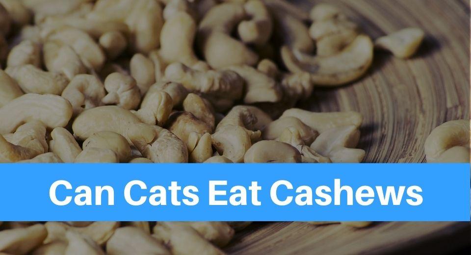 can-cats-eat-cashews