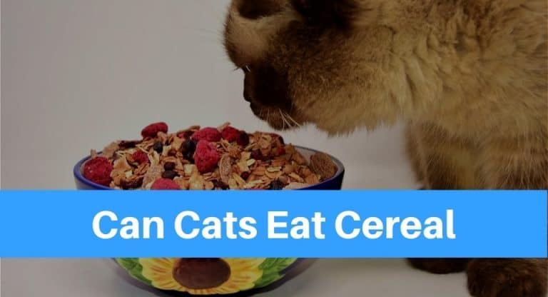 can-cats-eat-cereal