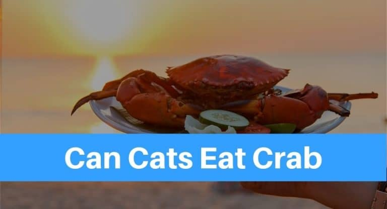 can-cats-eat-crab