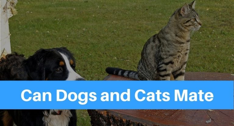 can-dogs-and-cats-mate