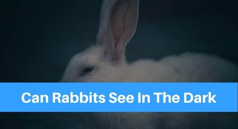 can-rabbits-see-in-the-dark