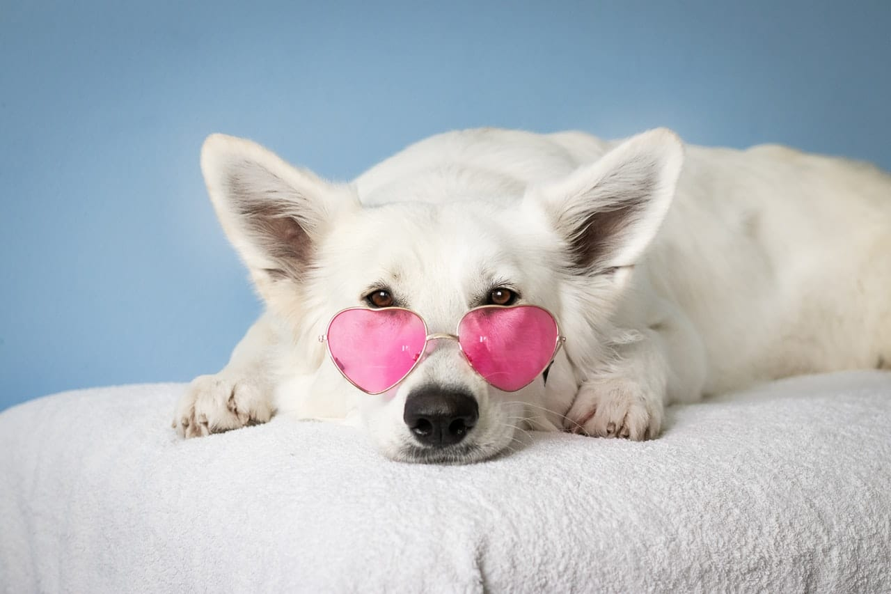 photo of a dog wearing heart-shaped glasses