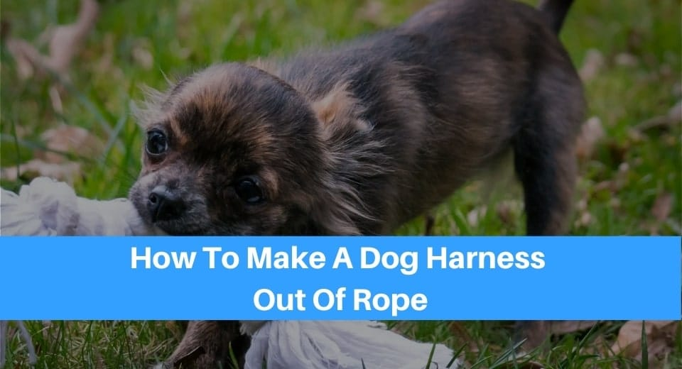 a photo of a small dog biting white rope