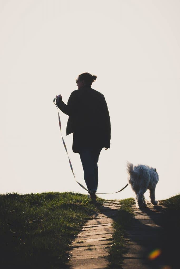 Here's How You Put On An Easy Walk Dog Harness 2