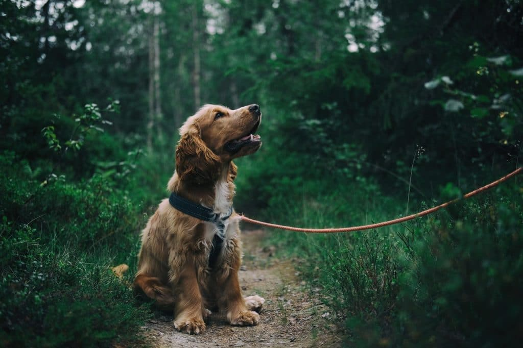 Here's How You Put On An Easy Walk Dog Harness 3