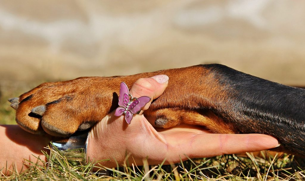 How to Use Dog Nail Clippers 3