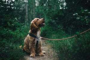 How To Measure A Dog For A Harness The Right Way