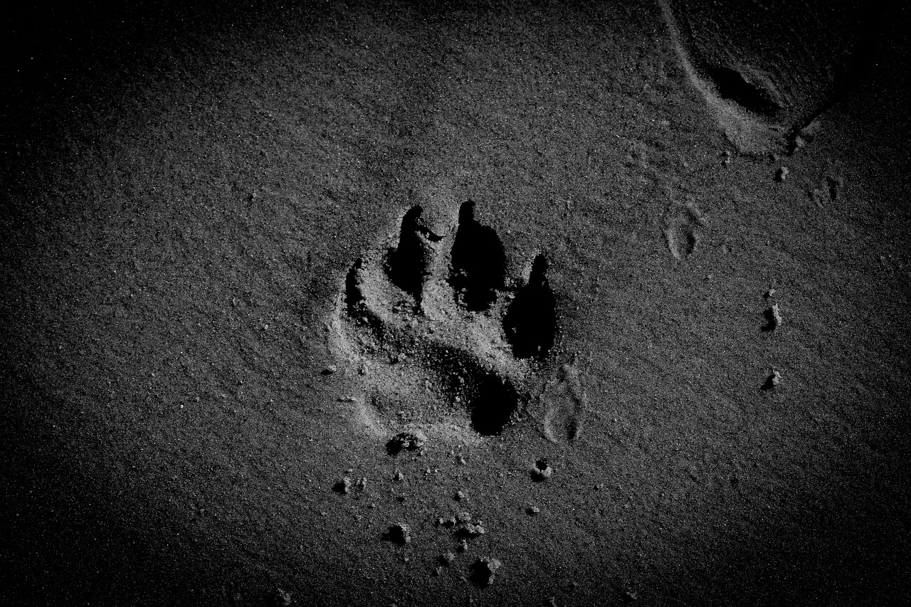 a black and white picture of dog paw prints left on the sand