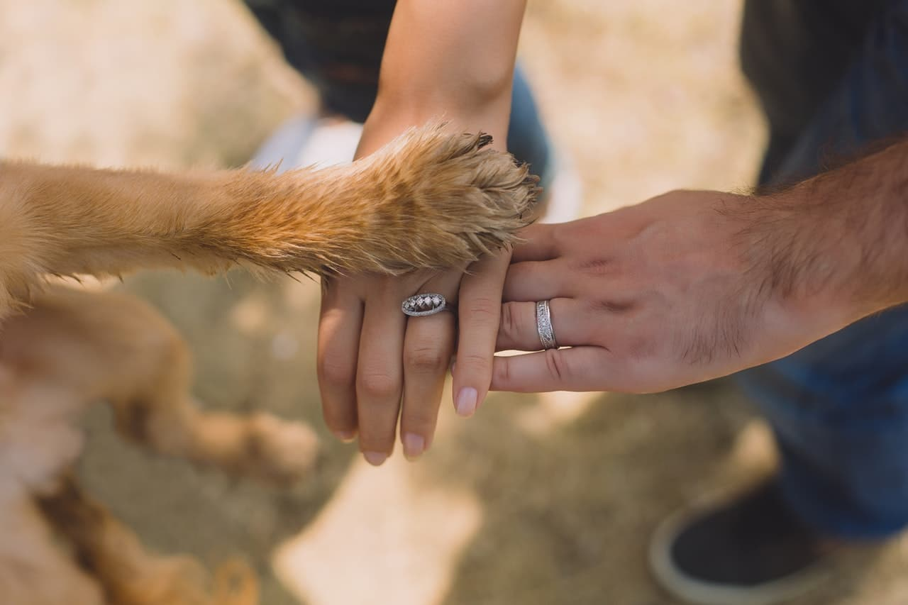 photo of a dog placing its paws on top a human hand