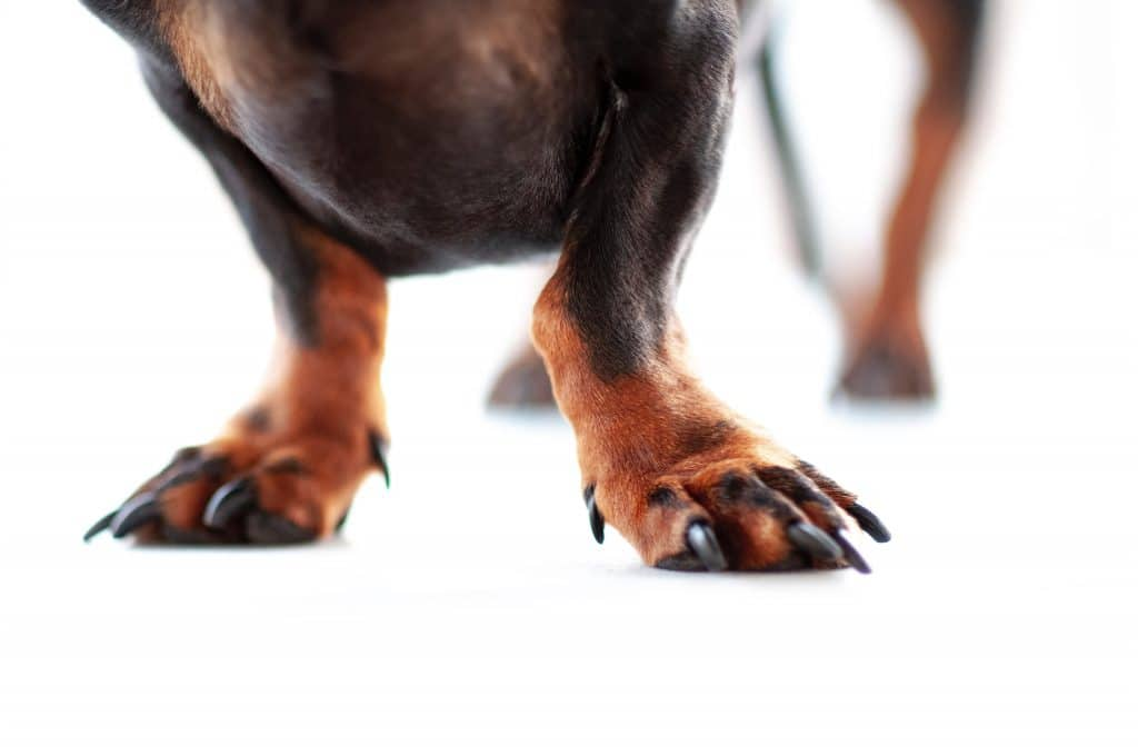 Use Nail Clippers Safely On Your Dog With A Guard 2