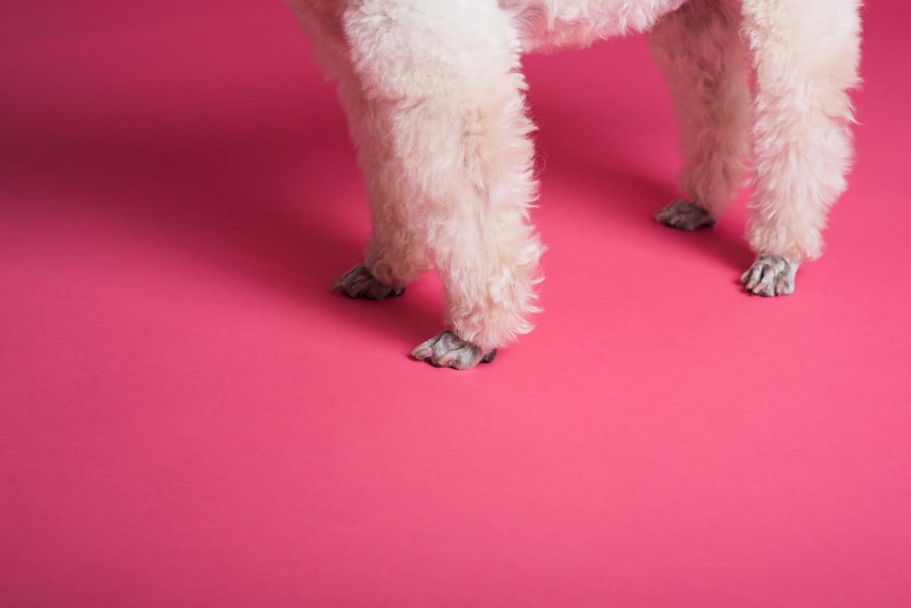 photo of dog paws against a pink backdrop