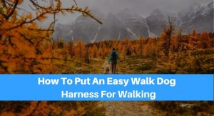How To Put An Easy Walk Dog Harness For Walking