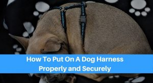 How To Put On A Dog Harness Properly and Securely
