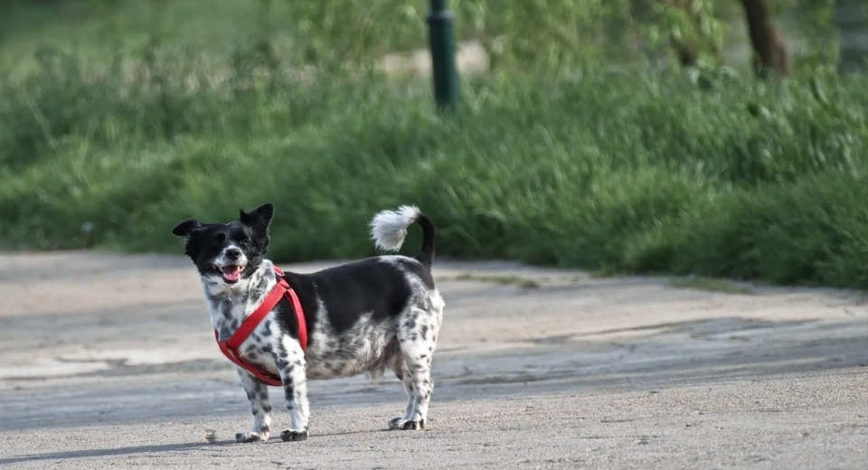 Measure Your Dog For A Harness The Right Way 3