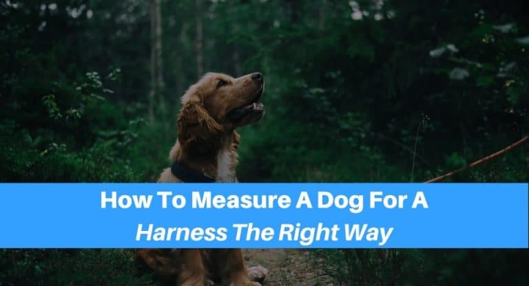 Measure Your Dog For A Harness The Right Way