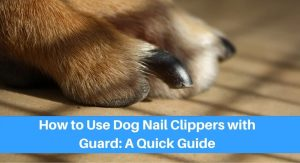 How to Use Dog Nail Clippers with Guard: A Quick Guide