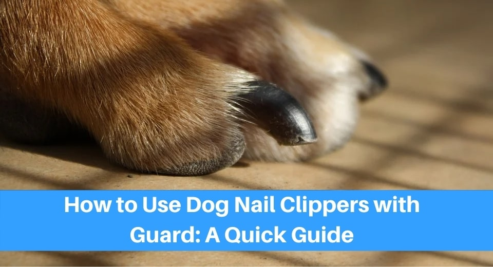 Nail-Clippers-Safely-On-Your-Dog-With-A-Guard