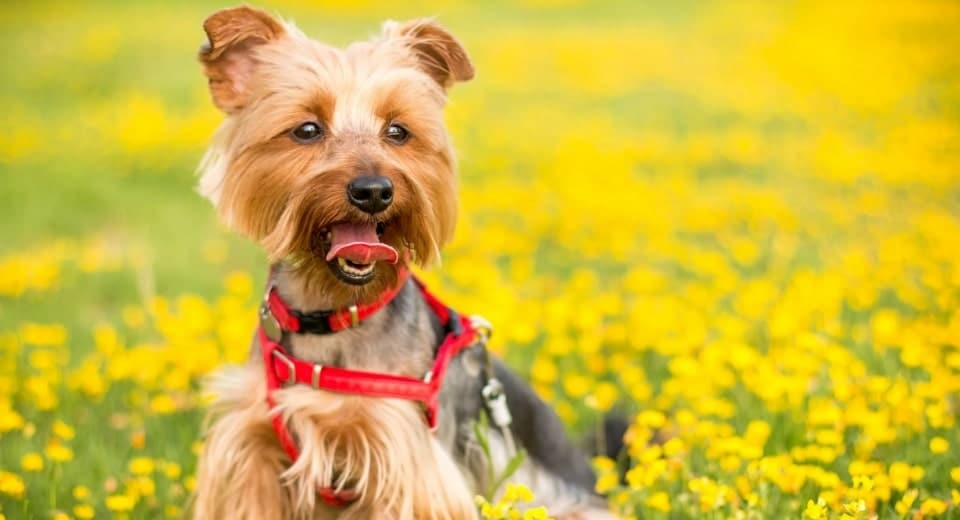 Should You DIY Your Dog's Harness 2