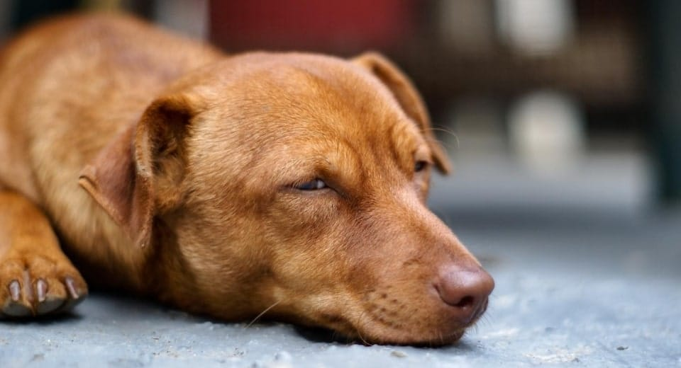 This Is How You Can Stop Your Dog's Nail Bleeding 1