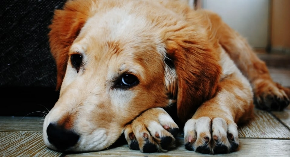 This Is How You Can Stop Your Dog's Nail Bleeding 2