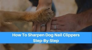 How To Sharpen Dog Nail Clippers Step-By-Step