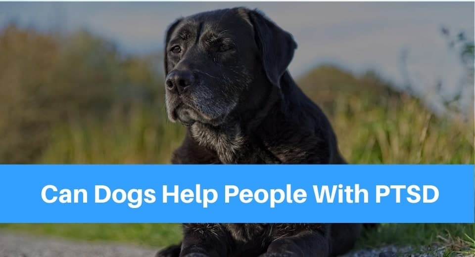 Can Dogs Help People With PTSD