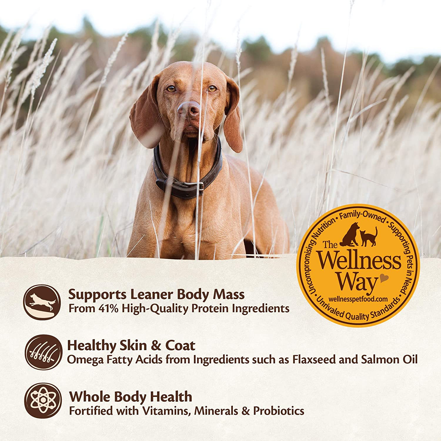 Benefits of Wellness dog food with a picture of a dog