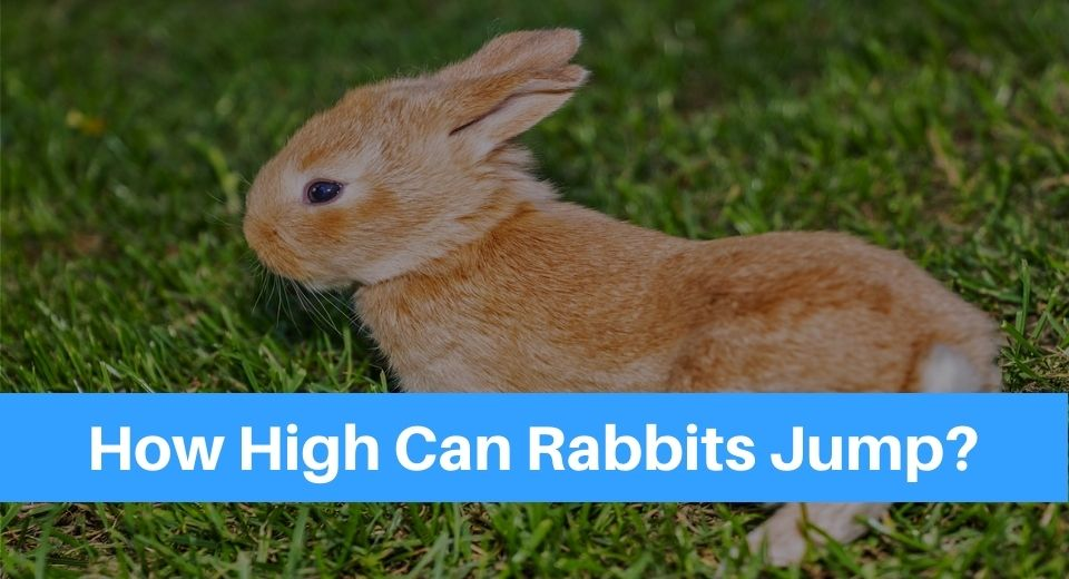 rabbit-jump
