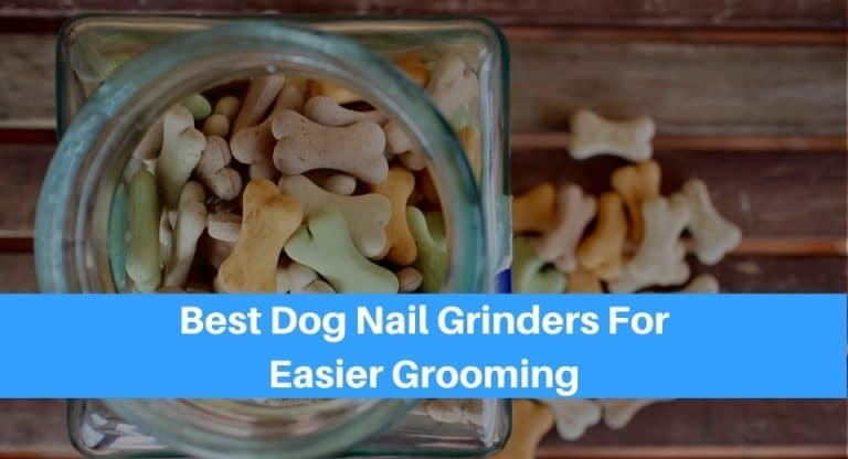 best-dog-food-container