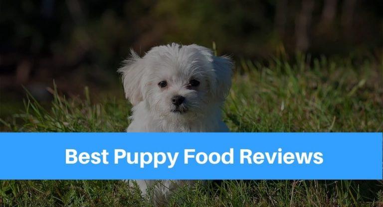 best-puppy-food