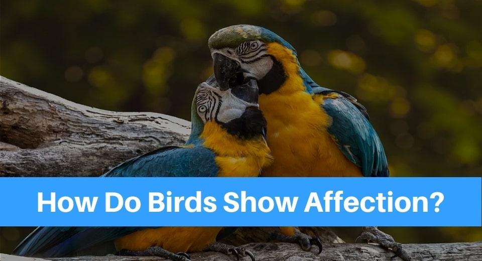 birds-affection