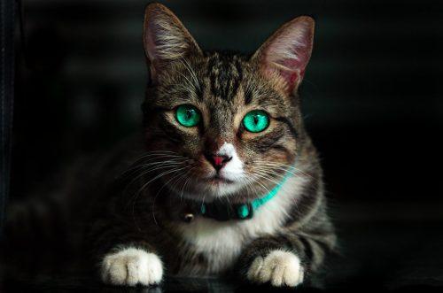 green-eyed cat staring