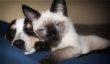 Are Cats Cleaner Than Dogs?