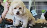 Best Dog Grooming Supplies Reviews 2017