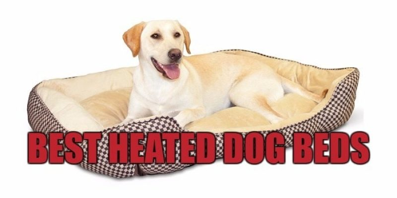 Best Heated Dog Beds Reviews 2020