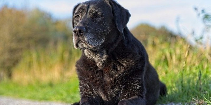 7 Best Senior Dog Food For Your Aging Canine