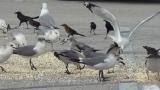 Can Birds Eat Popcorn?