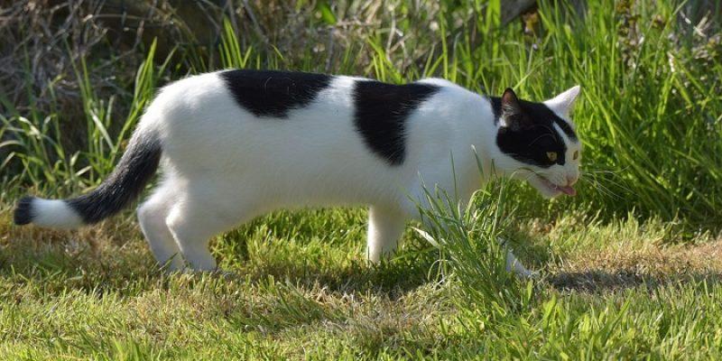 Can Cats Eat Chicken Bones?