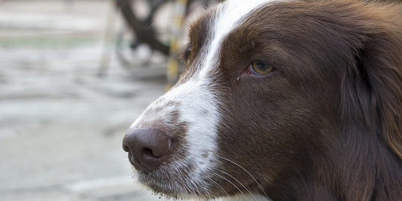 Can Dogs Be Depressed?