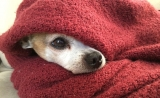 Can Dogs Catch Cold?