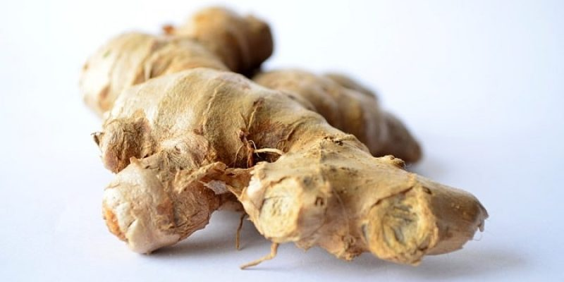 Can Dogs Eat Ginger?