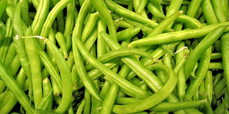 Can Dogs Eat Green Beans?