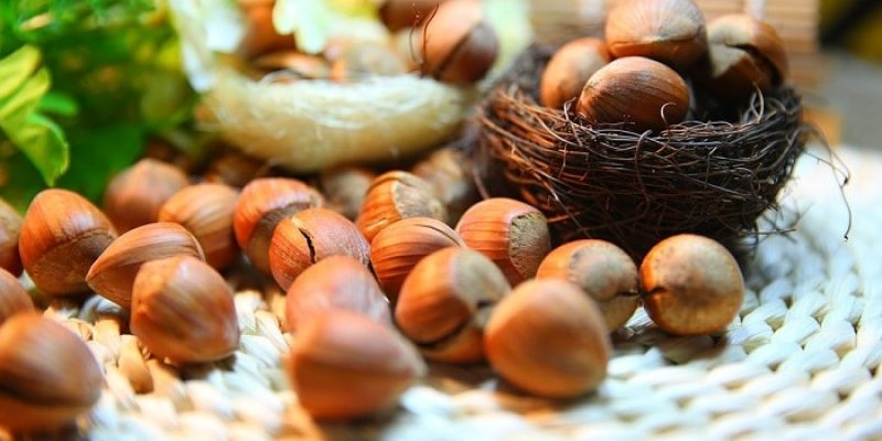 Can Dogs Eat Hazelnuts?